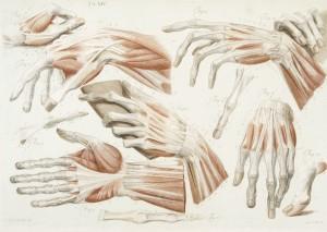 anatomia 3